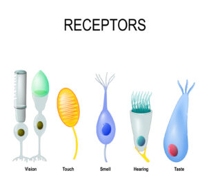 various receptors where virus can attach